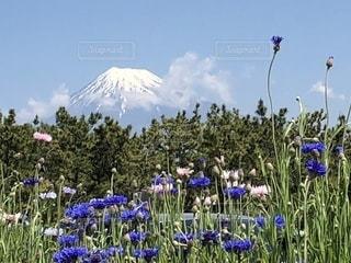 お花畑を見ている人々 のグループの写真・画像素材[1158099]
