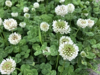 近くの花のアップの写真・画像素材[1158110]