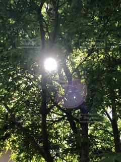 木の隣に座っているトラフィック ライトの写真・画像素材[1158122]