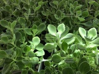緑の植物のグループ - No.1158128