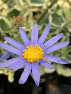 近くの花のアップの写真・画像素材[1197313]