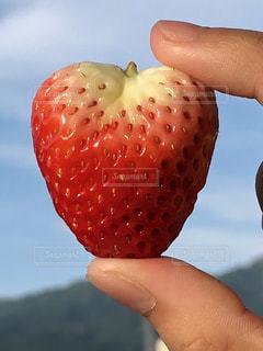 果物を持っている手の写真・画像素材[1197702]