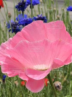 植物にピンクの花の写真・画像素材[1197776]