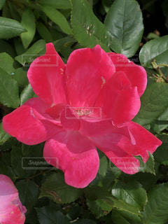 近くの花のアップ - No.1197806