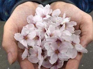 花を持っている手の写真・画像素材[1197824]