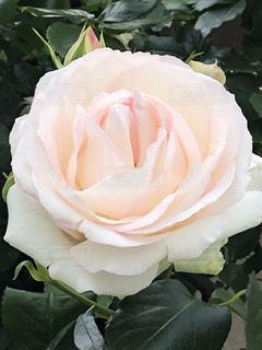 近くの花のアップの写真・画像素材[1206105]