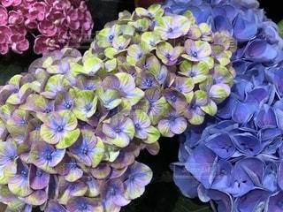 近くに紫の花のアップの写真・画像素材[1216886]