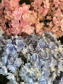 近くの花のアップ - No.1217920