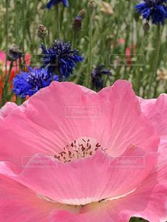 植物にピンクの花 - No.1218016