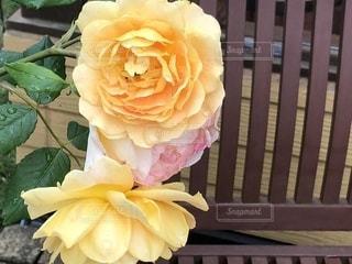 薔薇と椅子 - No.1224934
