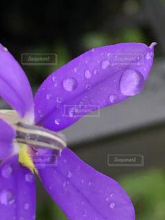 花,雨,紫,水滴,草花,水玉,梅雨