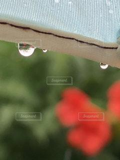 雨,傘,緑,赤,水滴,キラキラ,水玉,梅雨