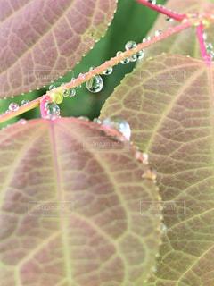雨,緑,赤,水滴,葉,キラキラ,水玉,梅雨,雨粒