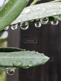 自然,木,雨,緑,水滴,葉,キラキラ,水玉,梅雨,雨粒