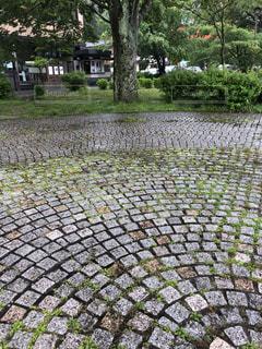雨,庭,樹木,石畳,梅雨,ガーデン,敷石