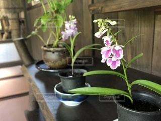 植木鉢、花瓶 - No.1247776