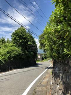 道の端に木のパス - No.1248077
