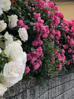 近くの花のアップ - No.1248219