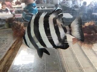 近くに魚のアップの写真・画像素材[1261075]