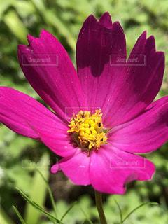 近くの花のアップの写真・画像素材[1479242]
