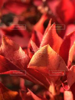 近くの花のアップの写真・画像素材[1647766]