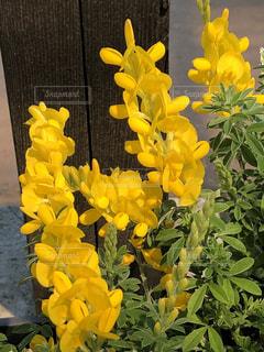 花,黄色,草花