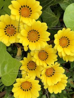 花,黄色,草花,たくさん