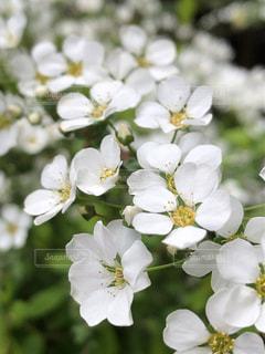 近くの花のアップの写真・画像素材[1886317]