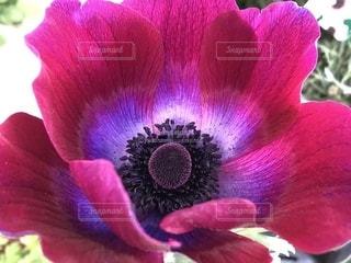 花の写真・画像素材[1947762]
