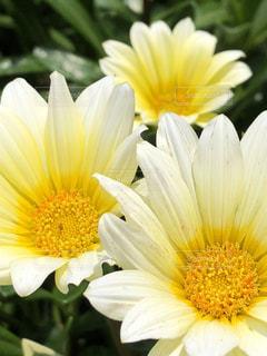 花の写真・画像素材[1981732]