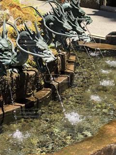 水,水滴,キラキラ,箱根,雫,九頭龍神社,手水舎