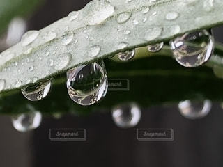 雨,緑,水,水滴,葉,水玉,雫,グリーン,雨粒