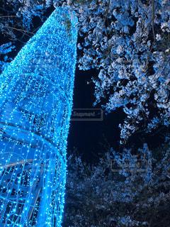 花,春,桜,木,夜桜,イルミネーション,青い