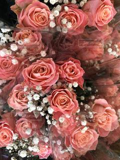 ピンクの薔薇たくさんの写真・画像素材[3086372]
