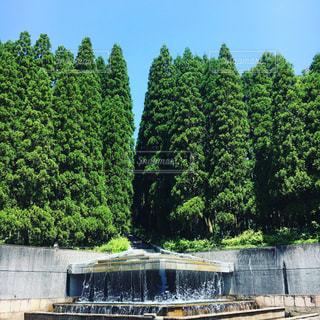 庭園の緑の植物の写真・画像素材[1163045]