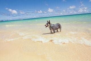 水の体の近くのビーチで馬に乗る人の写真・画像素材[1132181]