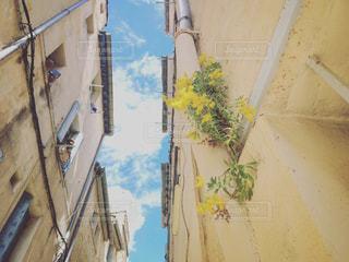 黄色い花と青い空の写真・画像素材[1129373]