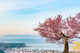 桜と海辺の町並みと対岸の山 北海道小樽市天狗山山頂の写真・画像素材[1141525]