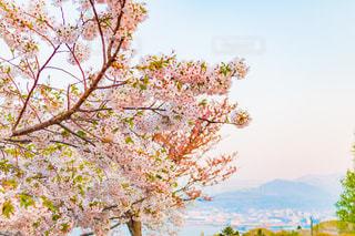 海,春,夕暮れ,海辺,北海道,季節,山,夕景,眺望,5月,町並み,マジックアワー,対岸,エゾヤマザクラ