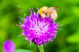 花と蜜蜂の写真・画像素材[1141561]