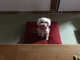 犬の写真・画像素材[36696]