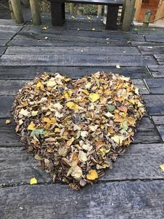 秋,屋外,枯れ葉,落ち葉,ハート,富良野