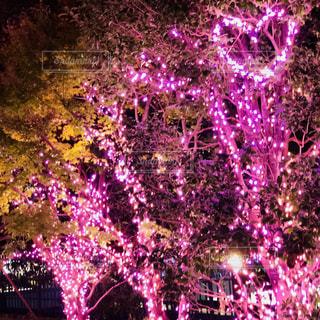 公園,夜,幻想的,景色,樹木,イルミネーション,ハート,リラックス