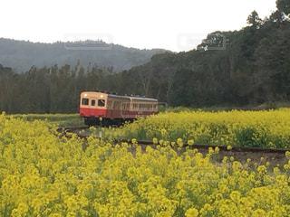 電車,黄色,菜の花,ローカル線,ディーゼル車