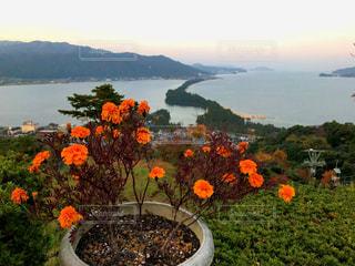 海,空,建物,花,屋外,緑,赤,カラフル,オレンジ,旅行,天橋立,華やか,色