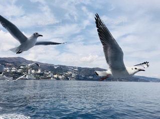 初島に向かうフェリーでカモメちゃんを餌付け。の写真・画像素材[1205788]