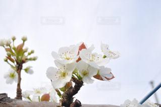 梨華の写真・画像素材[1134317]