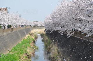 自然,空,花,春,桜,川,桜並木