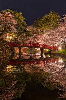 桜,夜景,ピンク,夜桜,ライトアップ,旅行,水鏡,青森,弘前公園,Reflection,写り込み