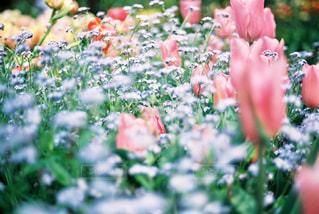 近くのフラワー ガーデンの写真・画像素材[1234647]